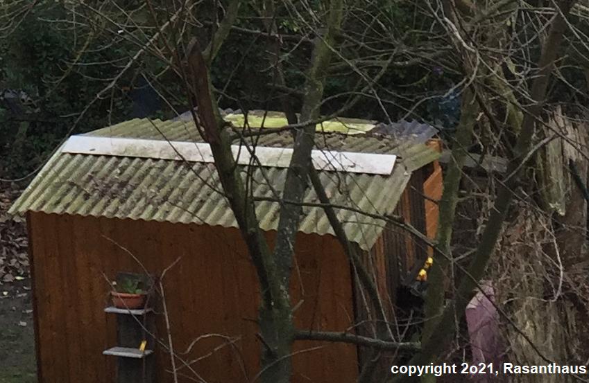 eine Holzhütte im Wald